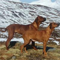 أنواع للحراسة مستوى العالم-اول موضوع تربيه الكلاب- بالصور