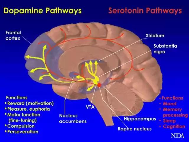 المشاهد الجنسية الدماغ علميا دراسة